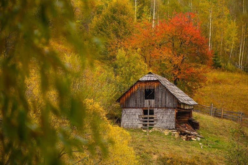 秋天与五颜六色的森林、木篱芭和被放弃的干草谷仓的风景风景在Prisaca Dornei 免版税库存图片