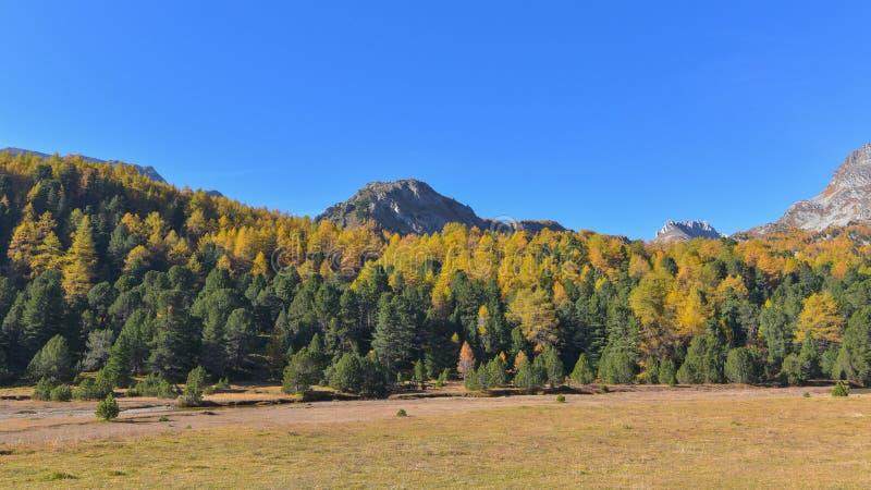 秋天与五颜六色的黄色森林的山风景 库存图片