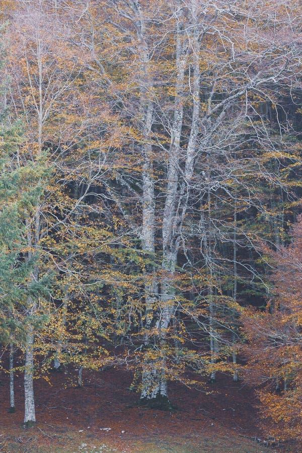 秋天与小河的早晨风景 在萨莱诺附近的自然 免版税库存照片