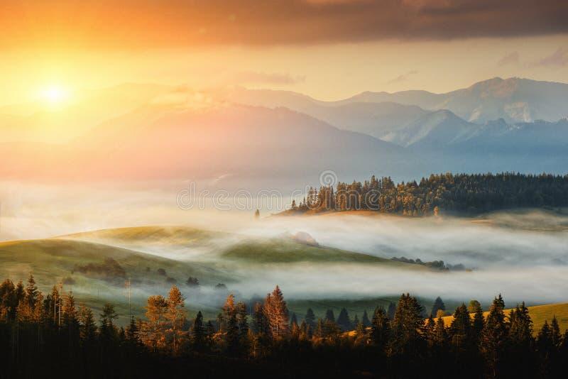 秋天与日出的风景图象或日落、美丽的雾在草甸和山在背景 库存图片