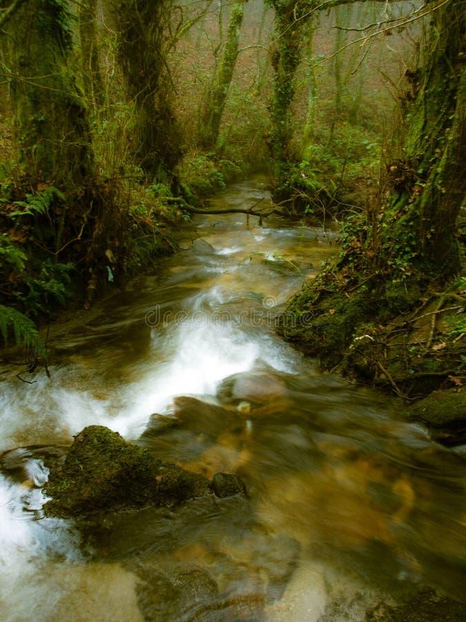 秋天与河的秋天场面森林的 免版税库存图片