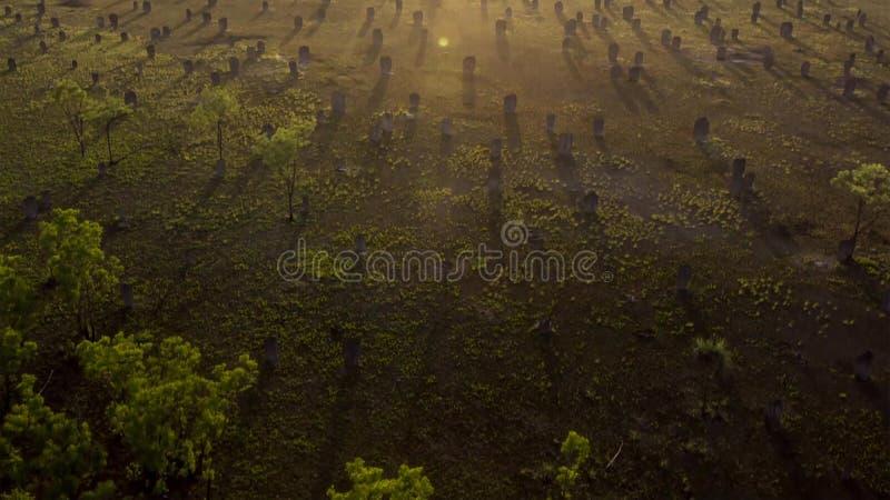 秋天与温暖的光光芒的森林风景  Mistic森林 免版税库存照片