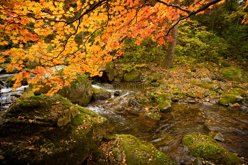 秋天与红槭树的森林小河Elomovsky在俄国Pri 图库摄影