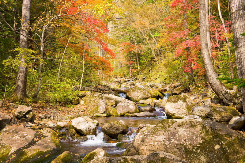 秋天与红槭树的森林小河Elomovsky 图库摄影