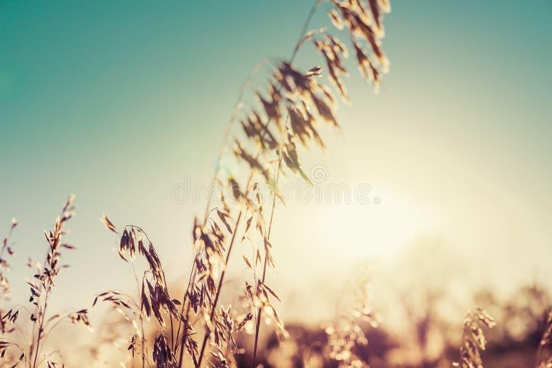 秋天与阳光的野花背景 免版税库存图片