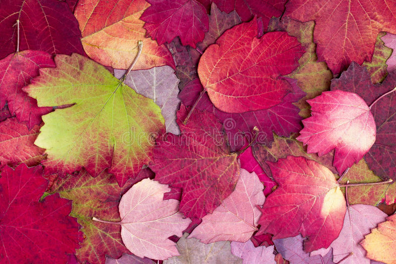 从秋天五颜六色的叶子的背景 免版税库存图片
