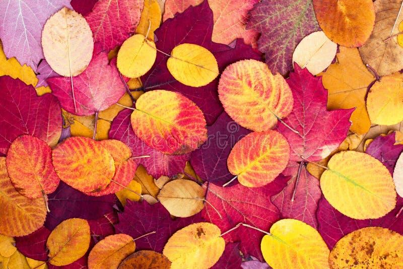 从秋天五颜六色的叶子的背景 库存图片