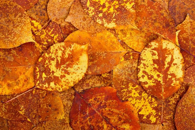 从秋天五颜六色的叶子的背景 图库摄影