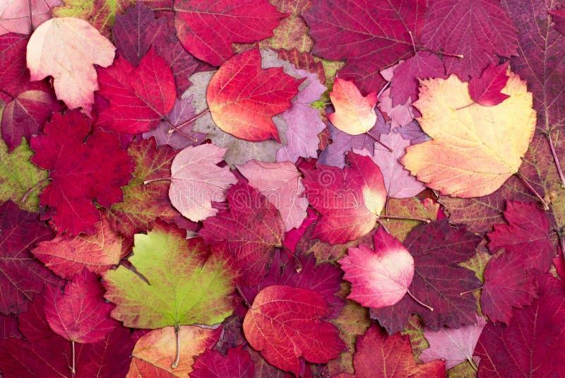 从秋天五颜六色的叶子的背景 库存照片