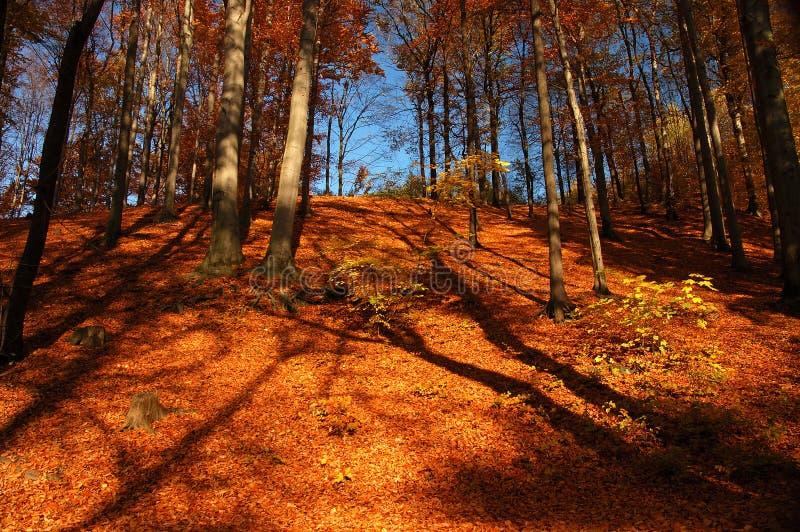 秋天五颜六色的心情 免版税库存图片