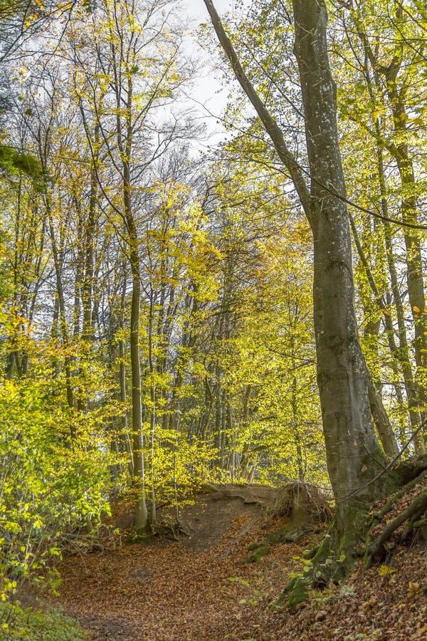 秋天五颜六色的森林 免版税库存图片