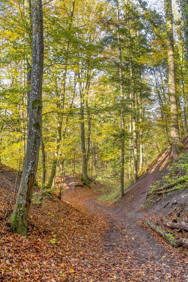 秋天五颜六色的森林 免版税图库摄影