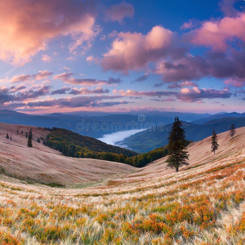 秋天五颜六色的横向 图库摄影
