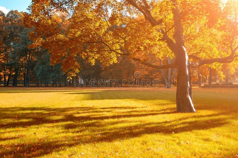 03rd, 2016 自治权, 自动驾驶仪, 背包, 蓝色, 照亮, 落叶, 秋天图片