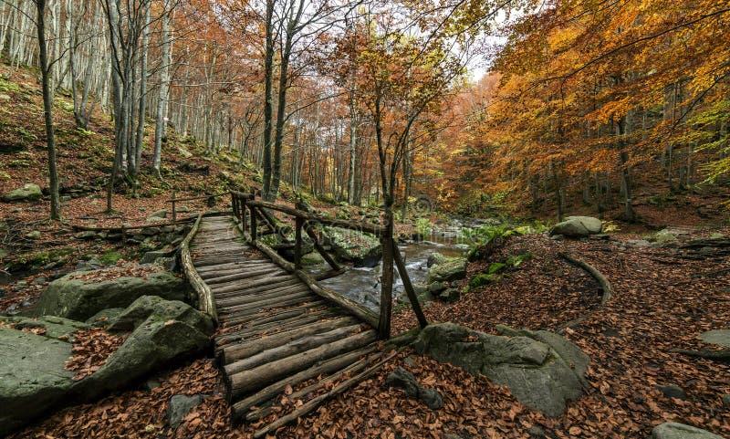 秋天五颜六色的风景 木桥梁在森林里 免版税库存图片
