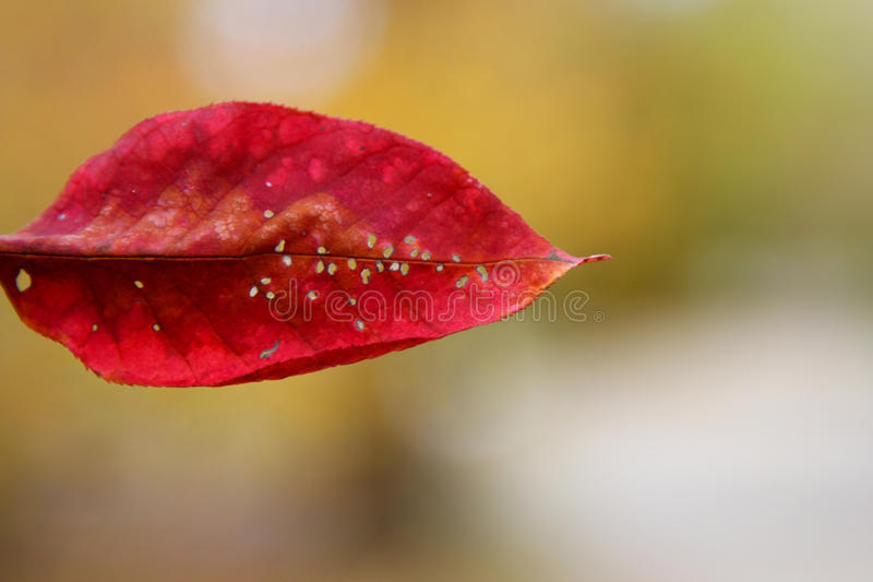 秋天亲吻 库存图片
