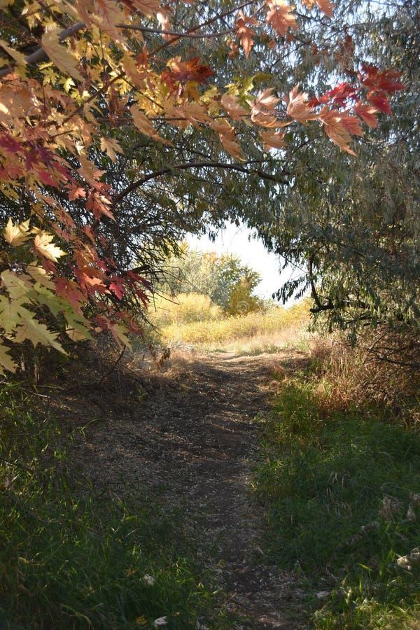 秋天仙境在Chamna储备, Richland, WA的自行车足迹 免版税库存图片