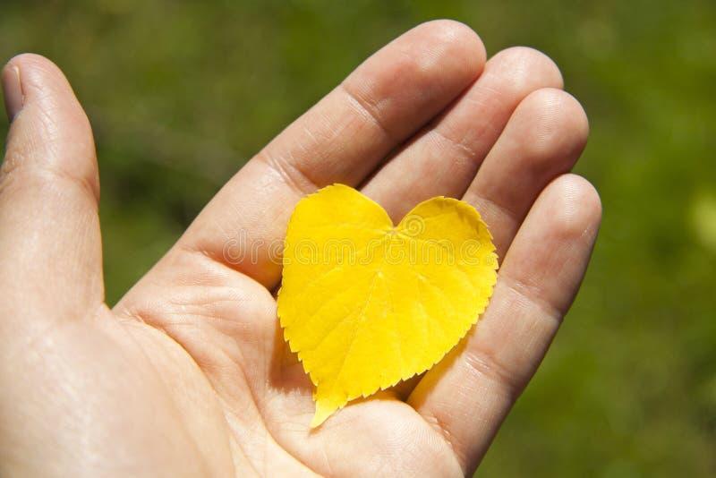 秋天以心脏的形式黄色叶子在手中 免版税库存图片