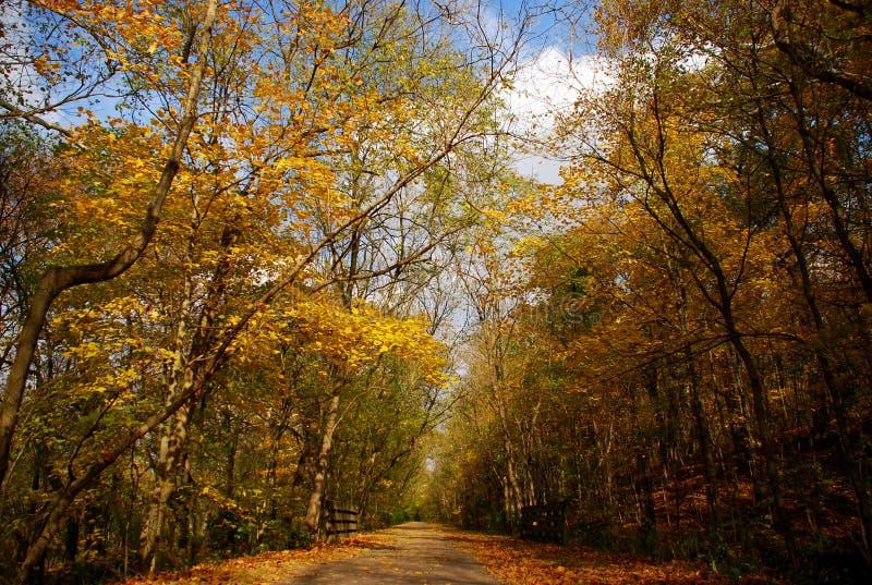 秋天俄亥俄南部的结构树 免版税库存照片