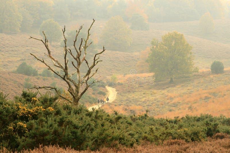 秋天停止的偏僻的结构树 免版税库存图片