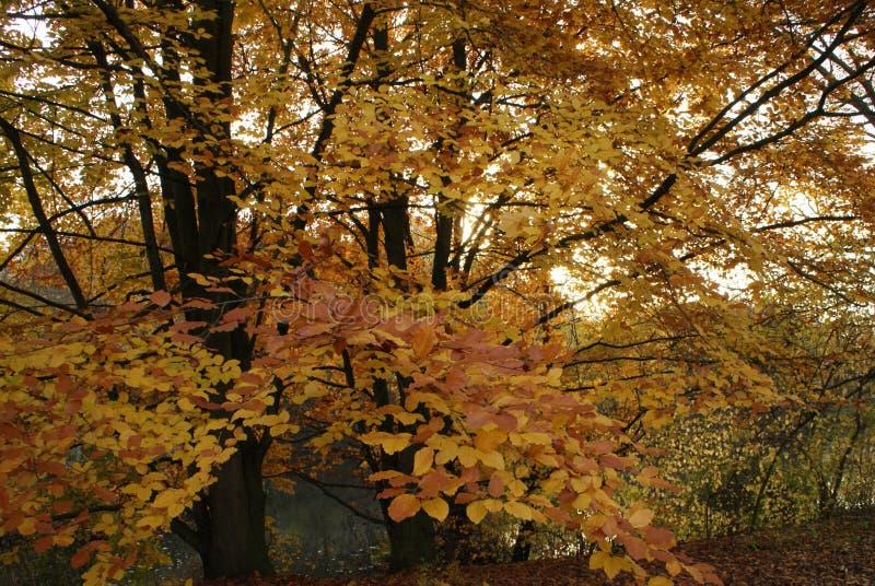 秋天公园在晴天 库存图片