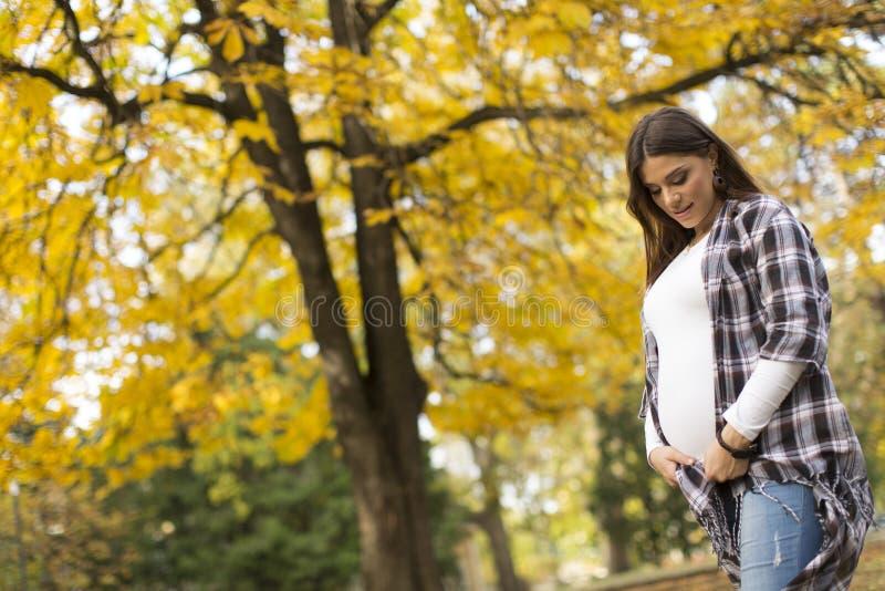 秋天公园孕妇 免版税库存图片