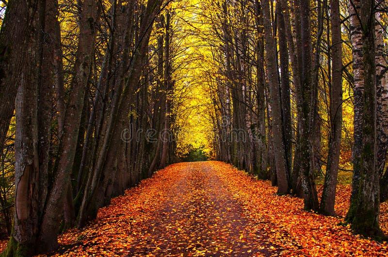 秋天公园胡同 明亮的秋天树和橙色秋叶 免版税库存照片