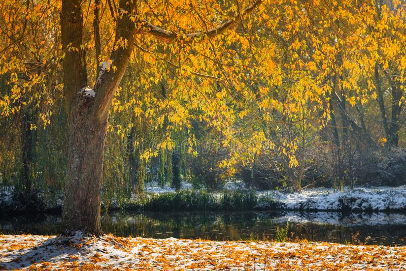 秋天公园风景  下落的黄色叶子和第一雪看法在阳光下 库存照片