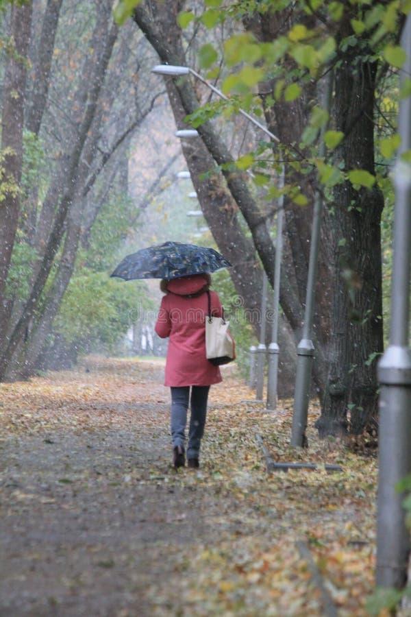 秋天公园 图库摄影