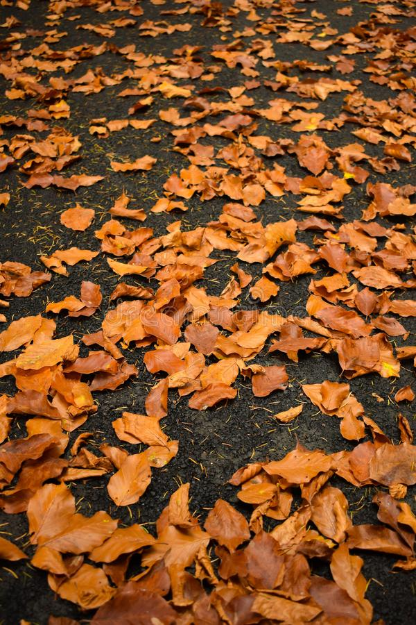 秋天划分为的陆运叶子 森林叶子 库存照片