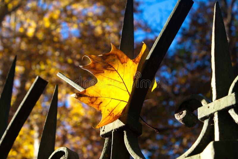 秋天到达了 图库摄影