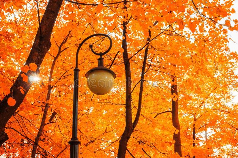 秋天前景横向橡木公园 秋天树和金属灯笼在被染黄的秋叶背景  免版税库存照片