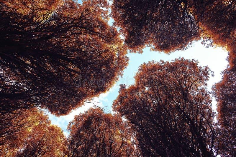 秋天前景横向橡木公园 库存图片