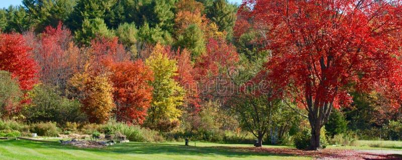 秋天叶子在佛蒙特 美好的五颜六色的风景 免版税库存图片