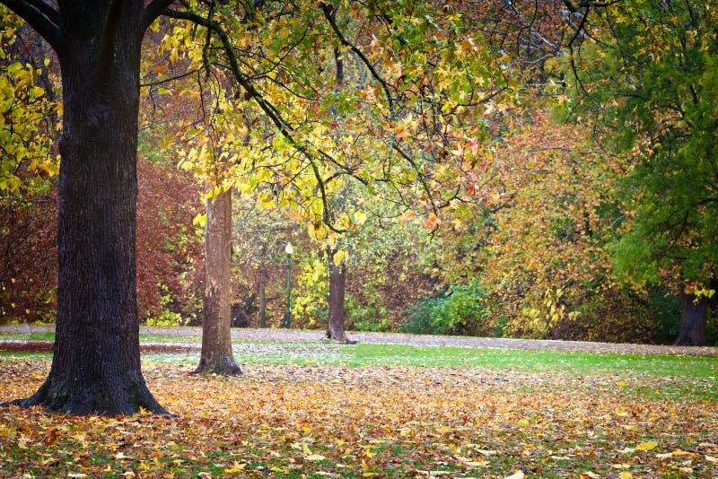 秋天叶子在公园 免版税库存照片