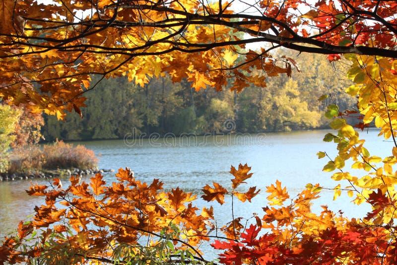 秋天叶子在明尼苏达 库存图片