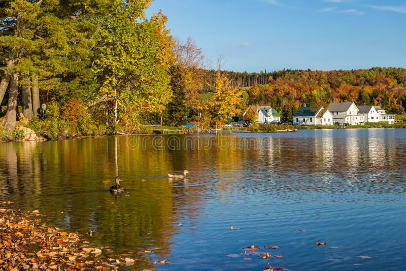 秋天叶子在Elmore国家公园在佛蒙特 免版税库存照片