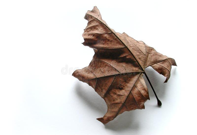 秋天叶子失去的白色 库存图片