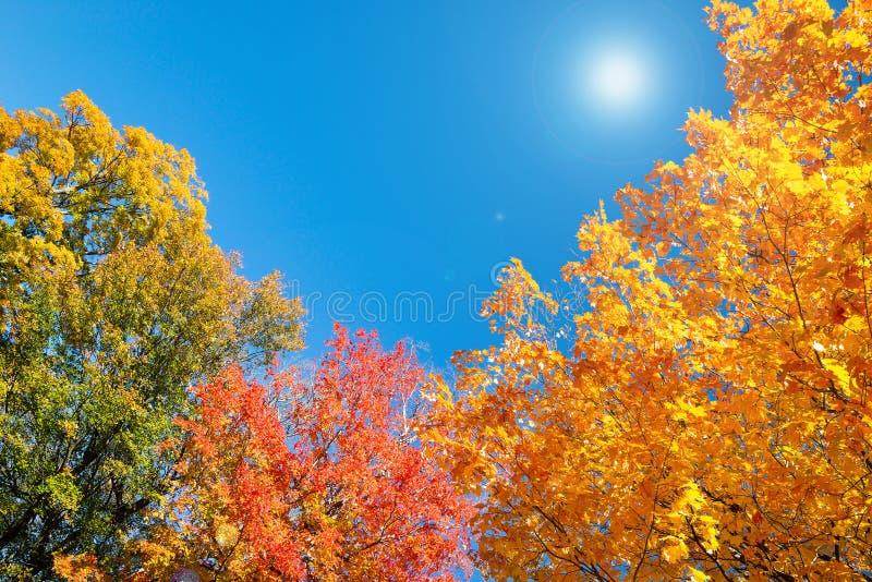 秋天叶子树上面离开反对晴朗的天空蔚蓝 库存图片