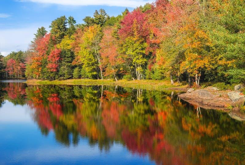 秋天叶子树反射在池塘 库存照片