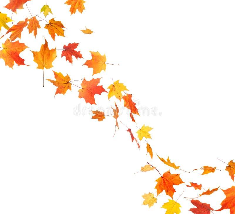 秋天叶子漩涡
