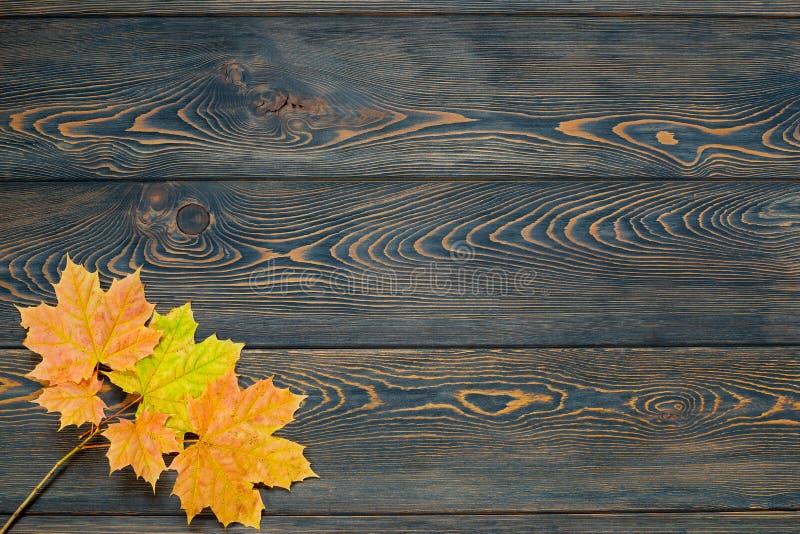 秋天叶子生命周期 与五颜六色的秋天槭树的秋天背景在土气木桌离开 库存图片