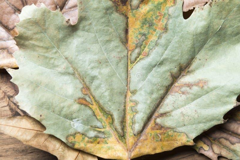 秋天叶子的细节 免版税库存照片