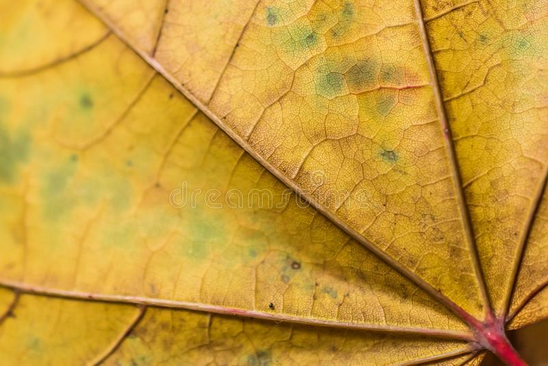 秋天叶子细节 库存图片