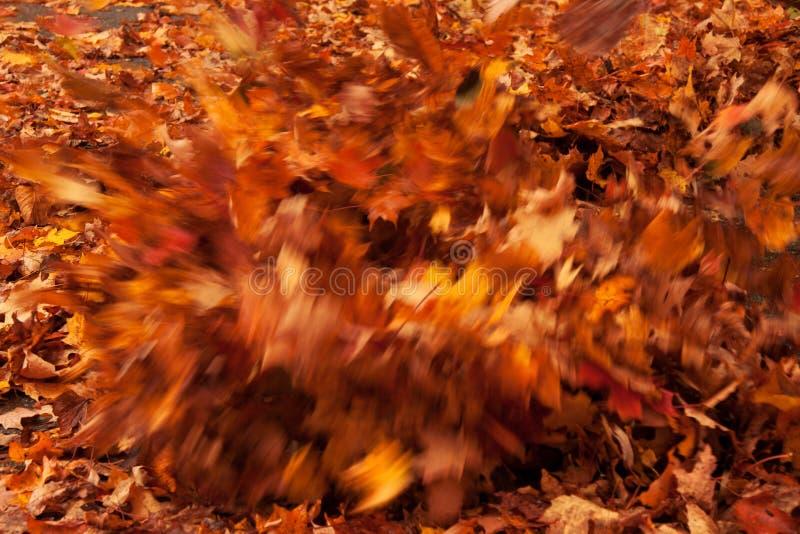 Download 秋天叶子 库存照片. 图片 包括有 季节性, 红色, 行动, 自治权, 橙色, 许多, 叶子, 消散, 蓝蓝 - 30327286