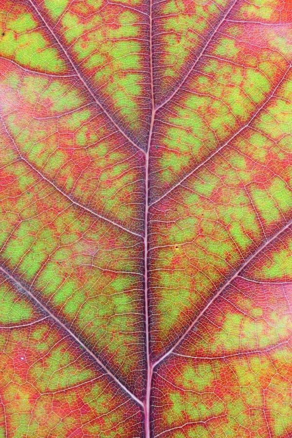 秋天各种各样的颜色-从绿色到红色和黄色-在一个oa 库存图片