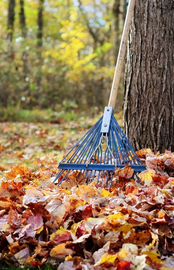 秋天后院场面 库存照片