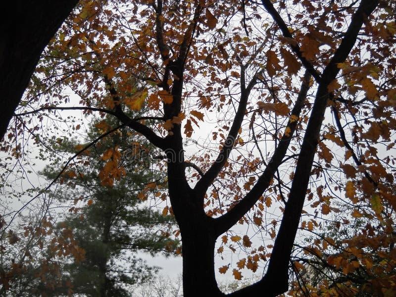 秋天和冬天 库存图片