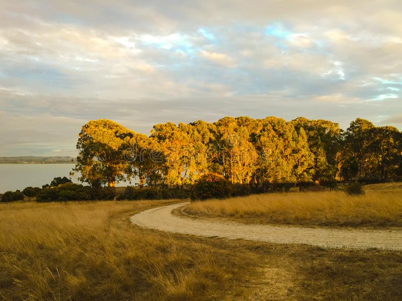 秋天和秋天晒干与人行道,金子的自然背景 免版税库存图片