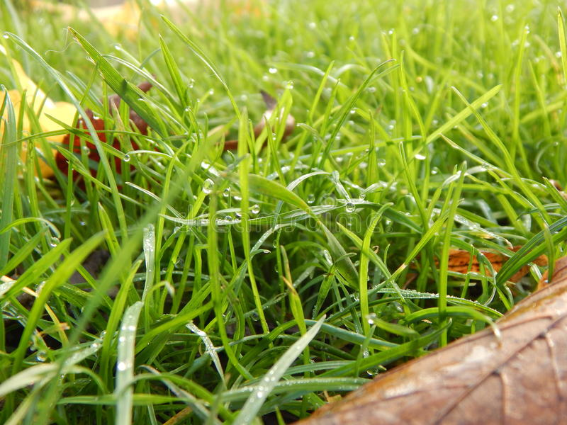 秋天和草 库存照片